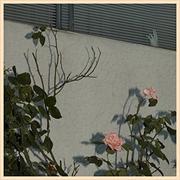 Savior | CD