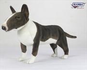 Bull Terrier 69cm