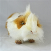 Guinea Pig White And Brown 31cm