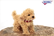 Toy Poodle 22cm: Large | Toy