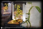 Fantastic Beasts and Where to Find Them - Bowtruckle Magical Creatures