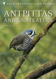 Antpittas and Gnateaters : Helm Identification Guides