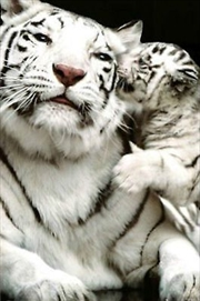 White Tigers-Mother'S Love