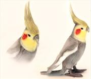 Cockatiel Grey 23cm H | Toy