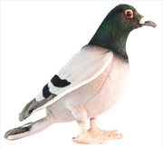 Pigeon 29cm L | Toy