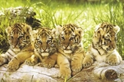 Four Tiger Cubs | Merchandise