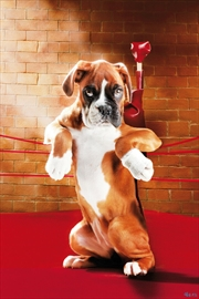 Knock Out Boxer