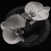 Corpse Flower - Smoky Swirl Vinyl