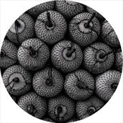 Parallel Space | Vinyl