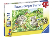 Ravensburger - Sweet Koalas and Pandas Puzzle 2x24 Piece Puzzle | Merchandise