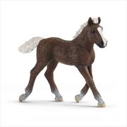 Schleich Figure - Black Forest Foal | Merchandise