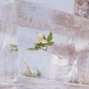 Windflowers   CD