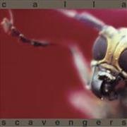 Scavengers | CD