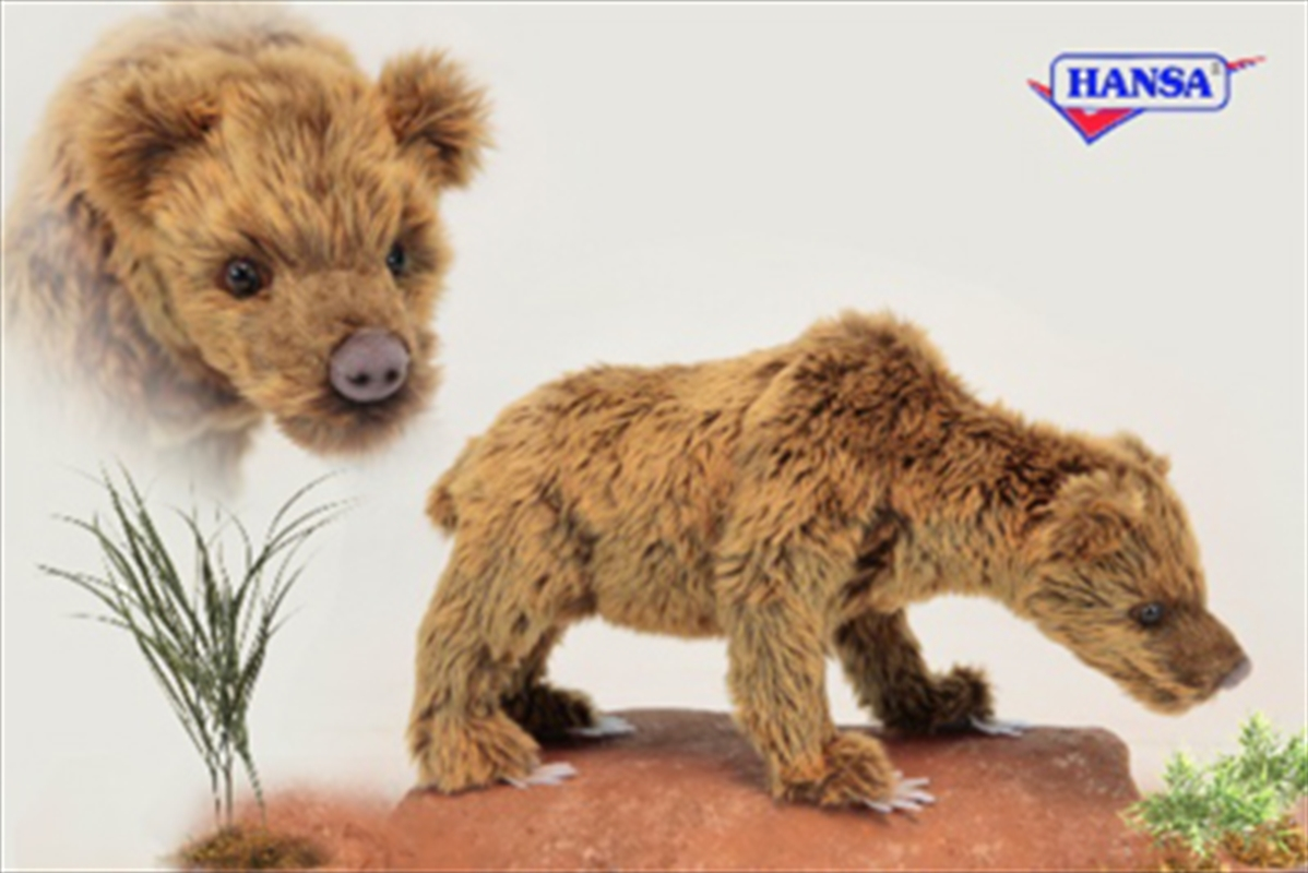 Cave Bear Ursus 34cm | Toy