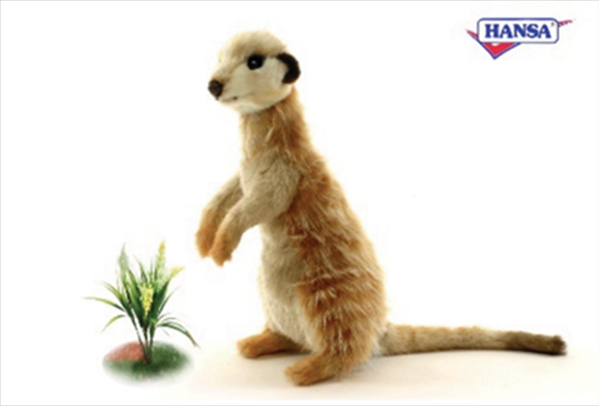 Meerkat Sitting 32cm   Toy