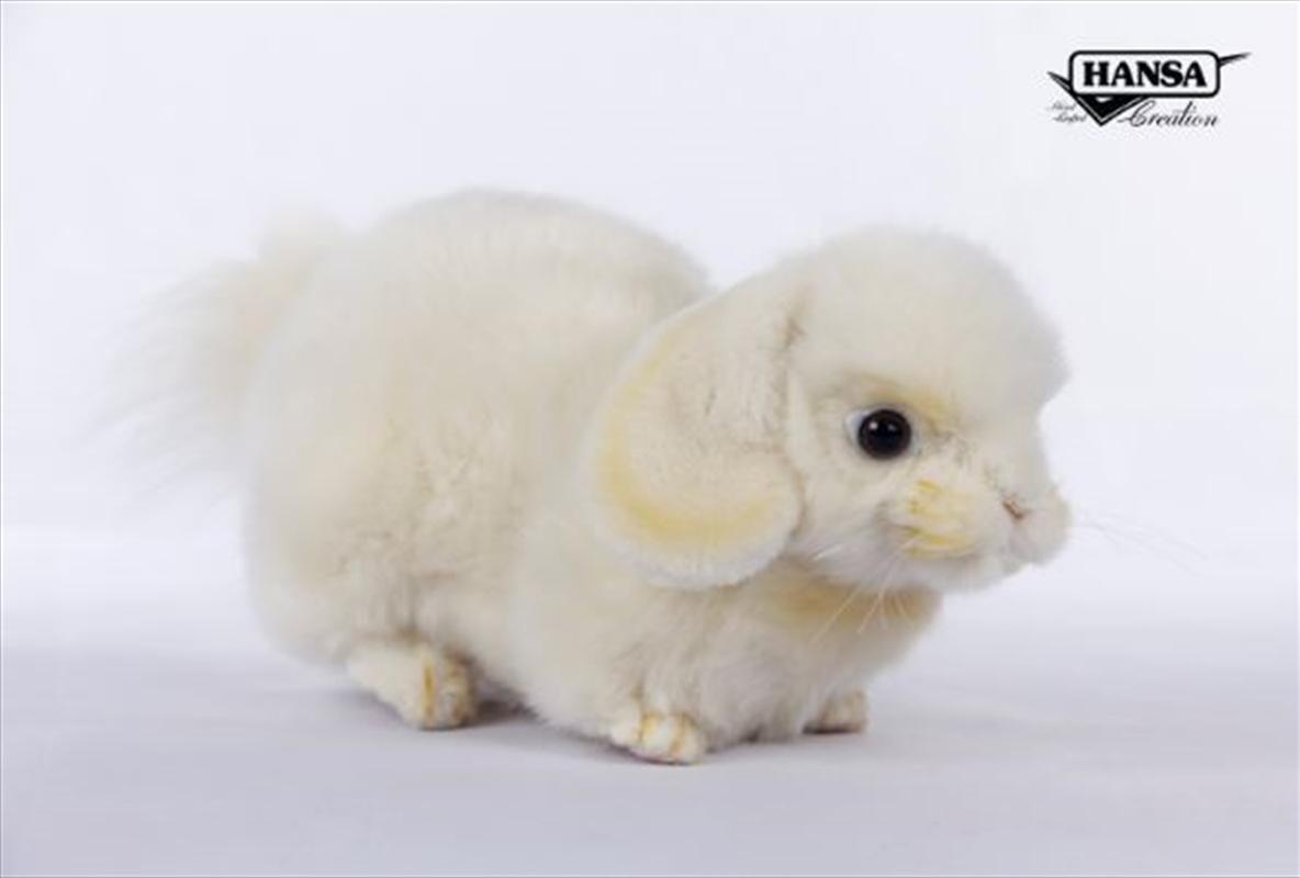 Cream Lop Ear Bunny 25cm L | Toy