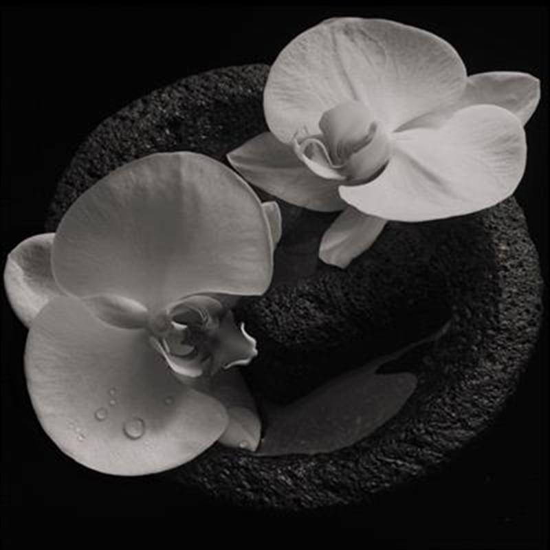 Corpse Flower | CD