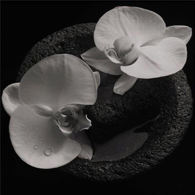 Corpse Flower - Smoky Swirl Vinyl | Vinyl