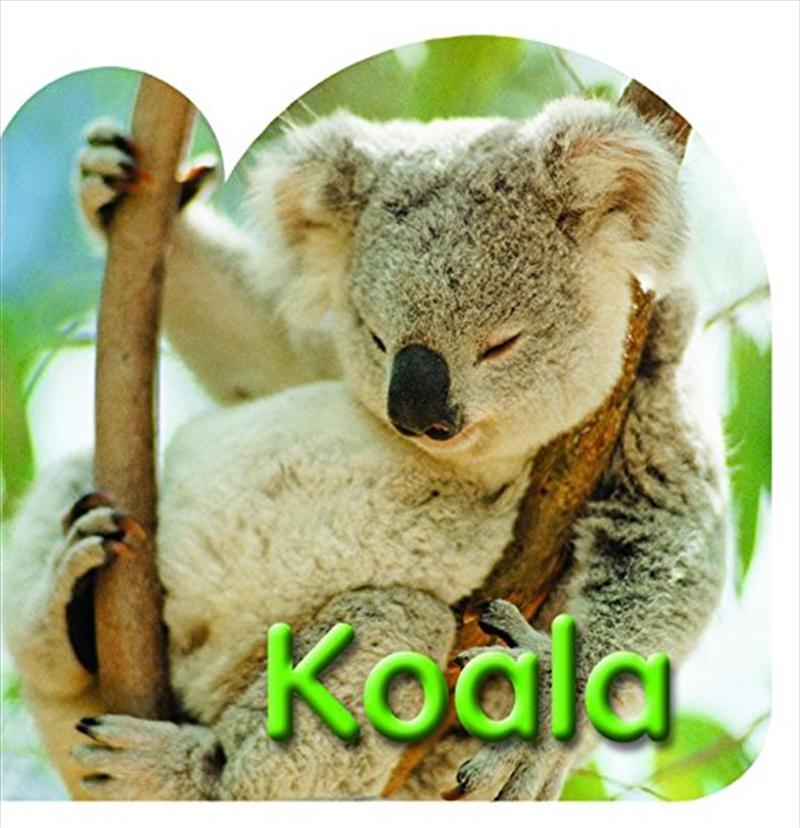 Steve Parish Board Book: Koala   Board Book