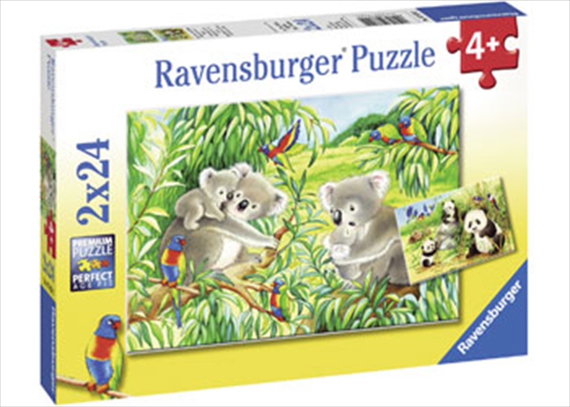 Ravensburger - Sweet Koalas and Pandas Puzzle 2x24 Piece Puzzle   Merchandise