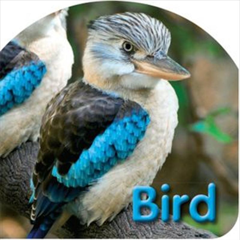 Kids Board Bk Birds | Board Book